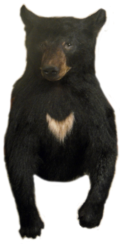 3/4 mount bear