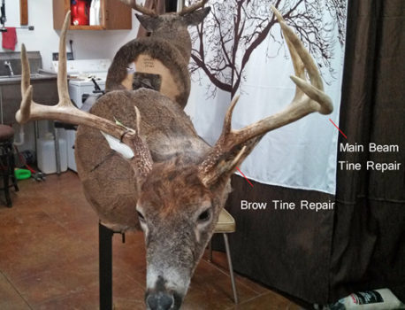 Tine Repair - Whitetail