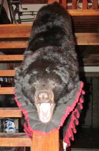 black bear rug front