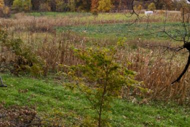 Screening for division of a large food plot. Picture taken late fall.