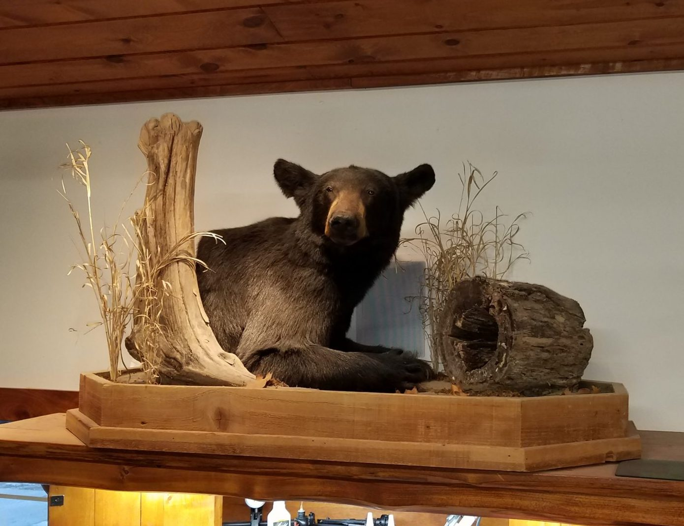 Bear 1/2 mount