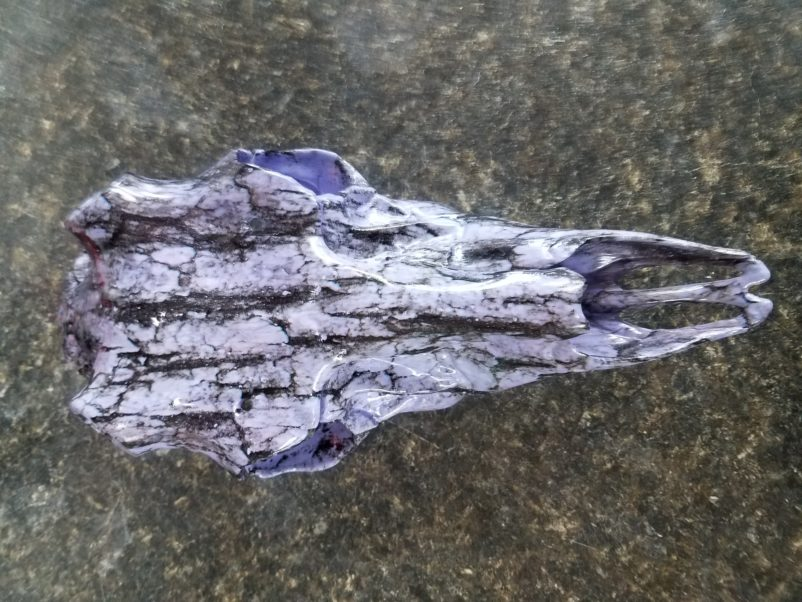 Purple Oak Bark