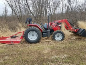 Mowing switchgrass