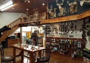 Showroom view from taxidermy studio